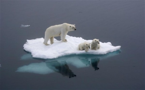 global-warming_medvedi_on_ice