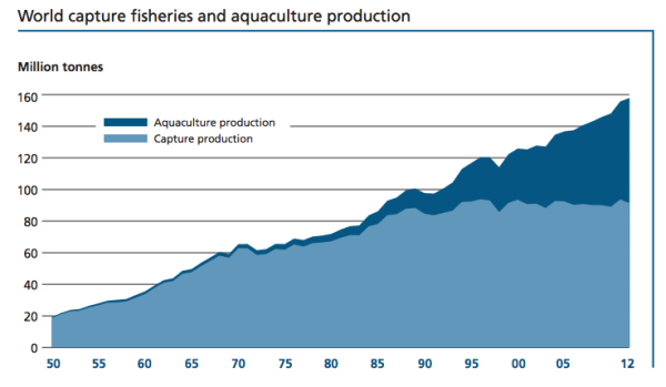 fish_production_by_UN_Food_and_Agriculture_Organization